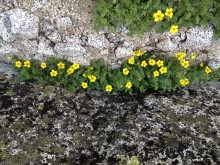 Flowers in rocks